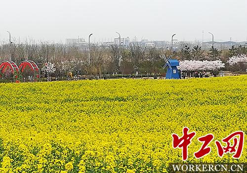 2018青岛西海岸油菜花节启幕