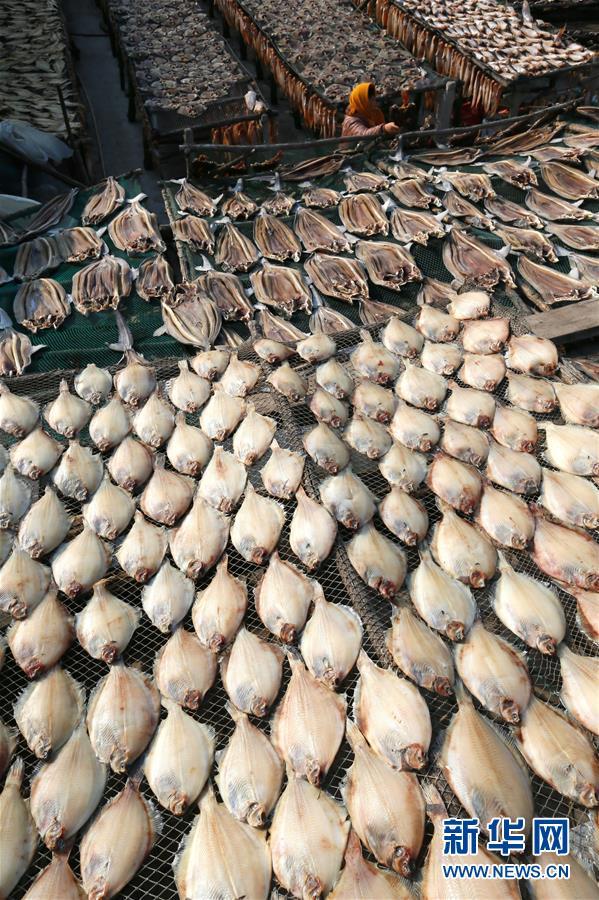 12月27日,山东省青岛市即墨区鳌山卫街道垛石村渔民在晾晒海鱼干.